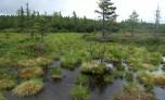 Přírodní rezervace Malý Polec